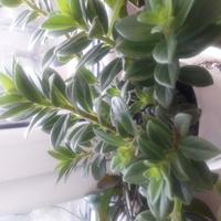 Mój drugi nowy kwiatek