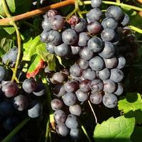 Nawadniamy organizm owocami :)