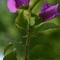 Nieznany kwiat w Parku Wilanowskim