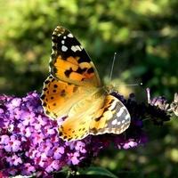 Nowego tygodnia pełnego motyli:)