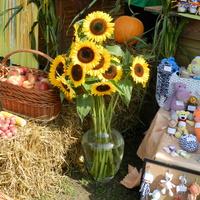 Ozdobne słoneczniki w wazonie