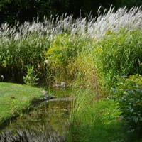 Ozdobne trawy nad kanałkiem z wodą.