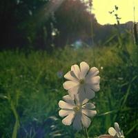Poranny trawnik :-)