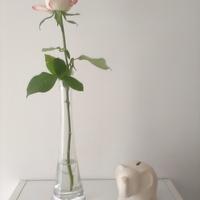 Róża ze słonikiem na szczęście