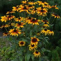 słoneczne kwiatki