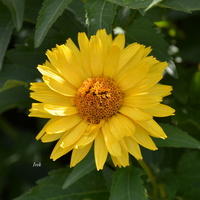 słoneczny kwiat