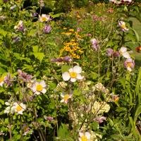 Sierpniowy ogród