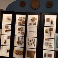 Wmuzeum O.Botaniczne