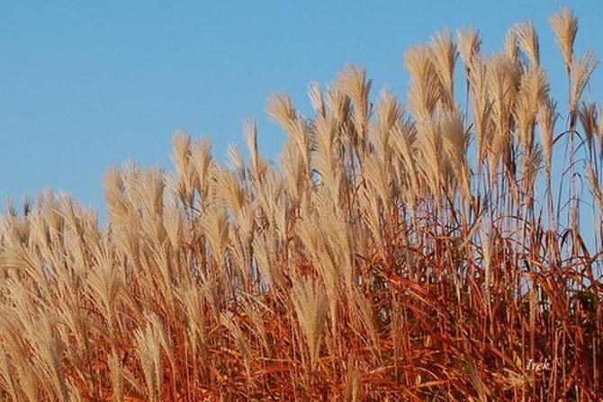 Dzisiaj jest pierwszy dzień jesieni