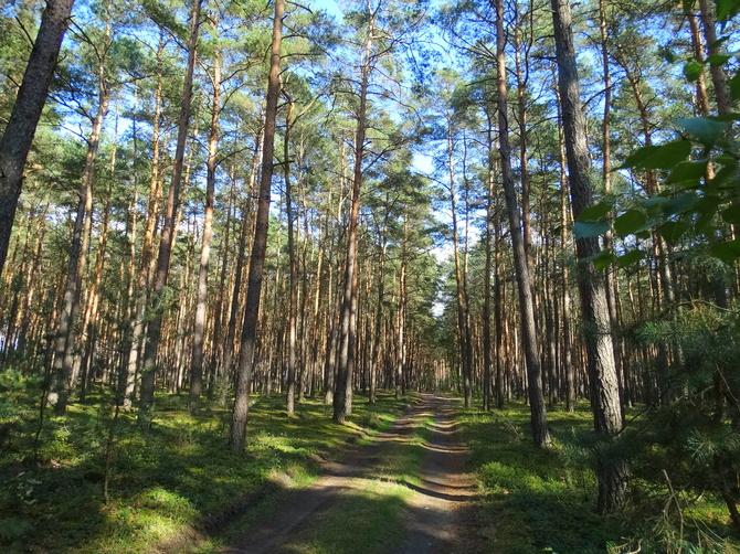 Dzisiaj Światowy Dzień Drzewa