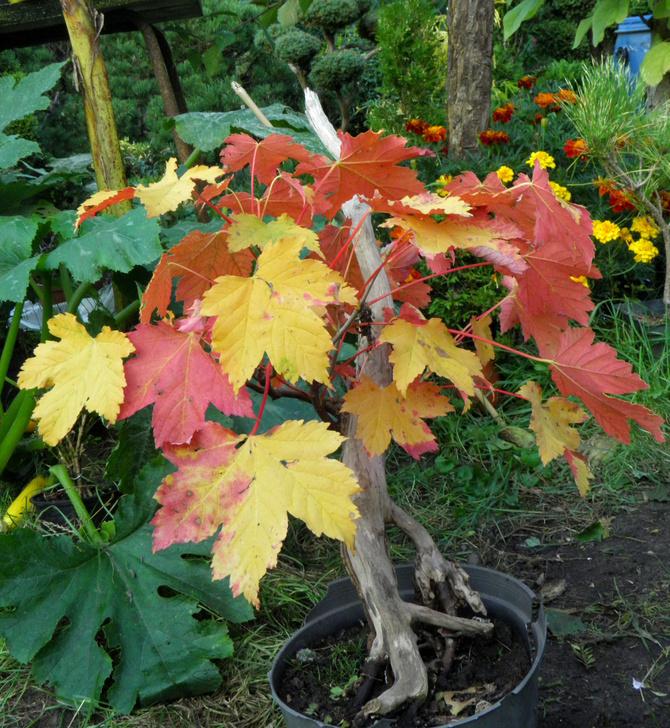 kolory jesieni 2