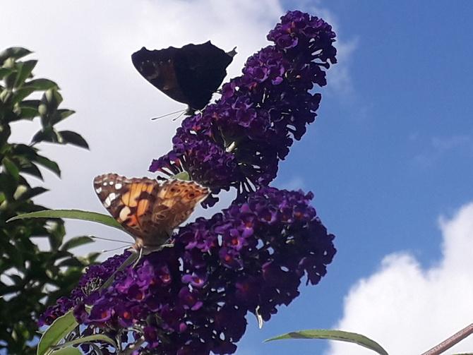 Wczoraj był dzień z motylkami