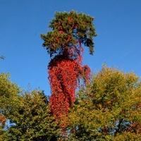 Jesień bywa piękna (to nie jest marchew)