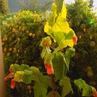 Kwiatowa kurtyna :)