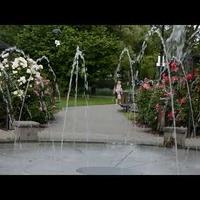 Kwiaty i fontanna w parku