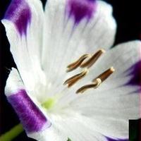 Kwitnące od wiosny:)