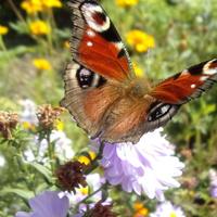 Motyle delektują się słońcem i ......