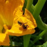Najpierw kwiat i pszczółka a