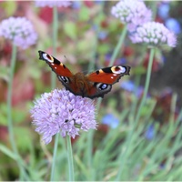 Niedziela z motylkiem...
