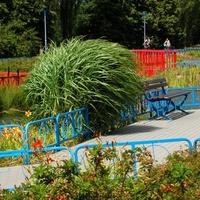 Ozdobne rośliny w parku
