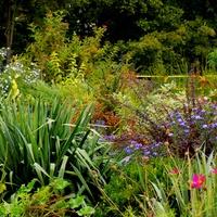 Pozdrowienia z jesiennego ogrodu :)