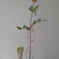 Róża i aniołek od kochanej Cioci