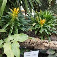 w botanicznym.....