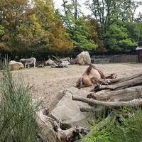 W zeszłym tygodniu w zoo