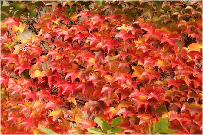 Jesienna elewacja...