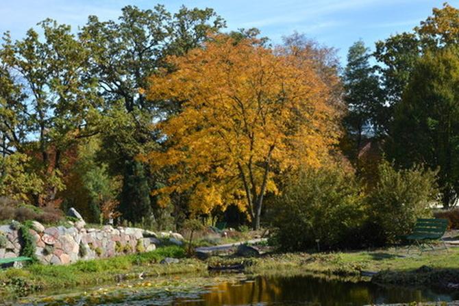 Jesienne drzewo nad stawem