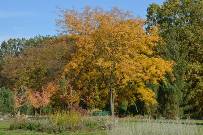 Jesienne drzewo w O B
