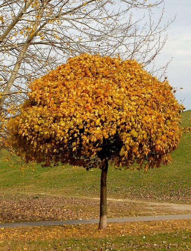 Jesienny parasol