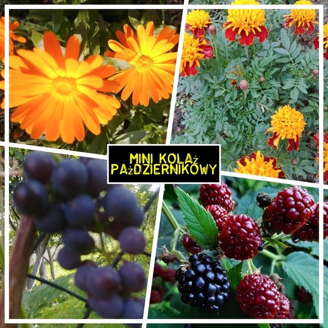 Jeszcze kwitną i owocują