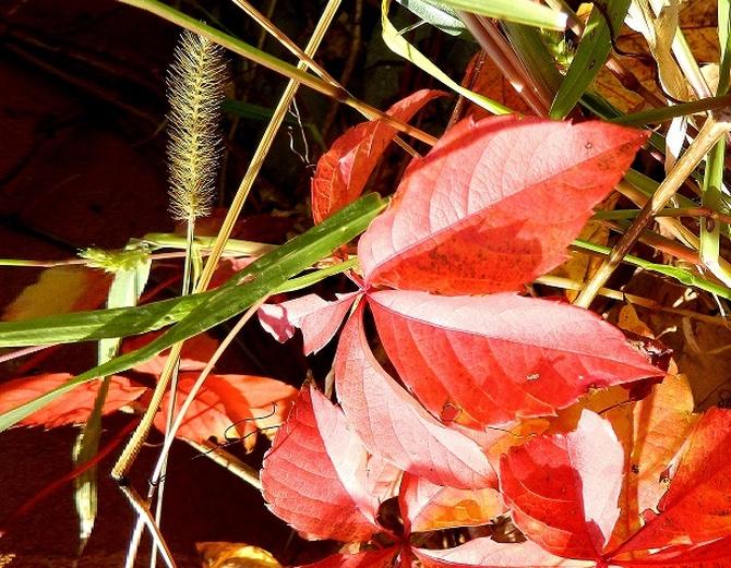 Kolory jesieni:)