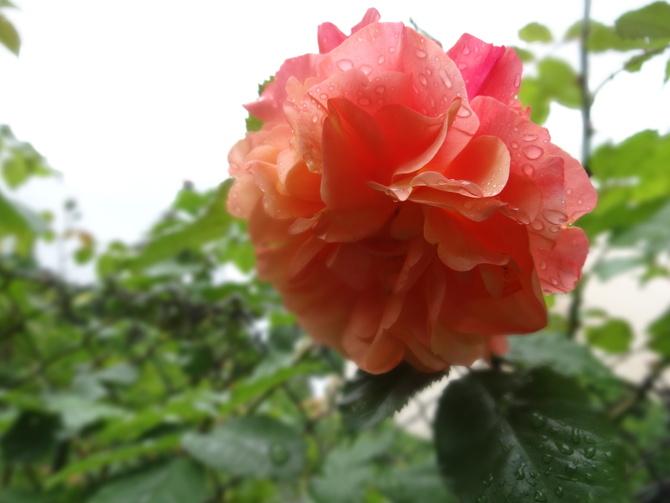 Niedzieli bez deszczu