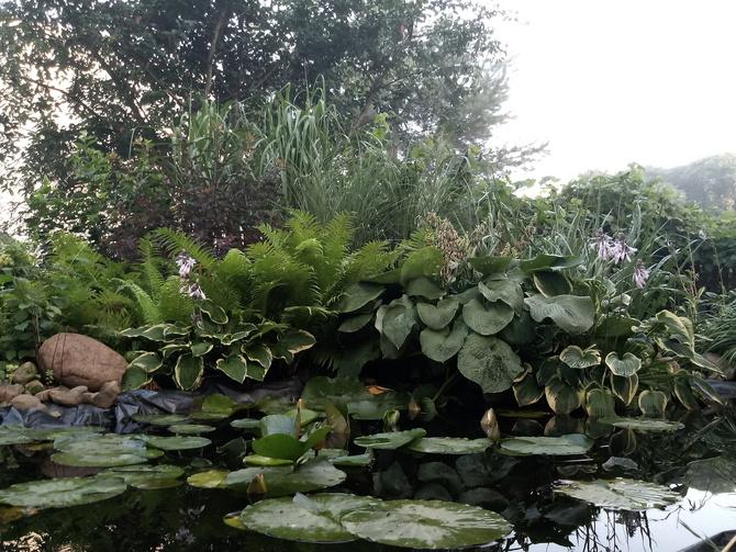 Ogród króla świtu ... :)