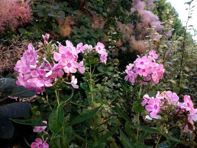 Ogród o świcie ...:)