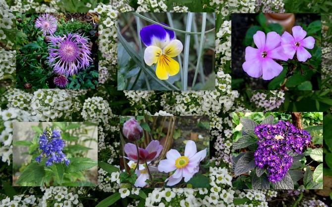 Parę kwitnących drobiazgów :)