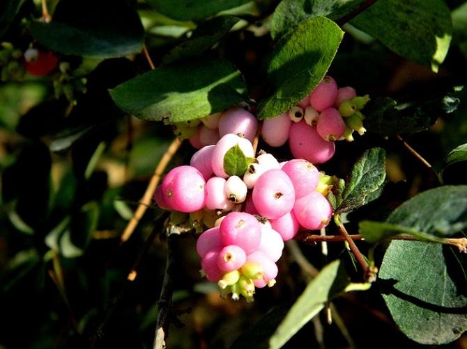 Różowe bąbelki:)