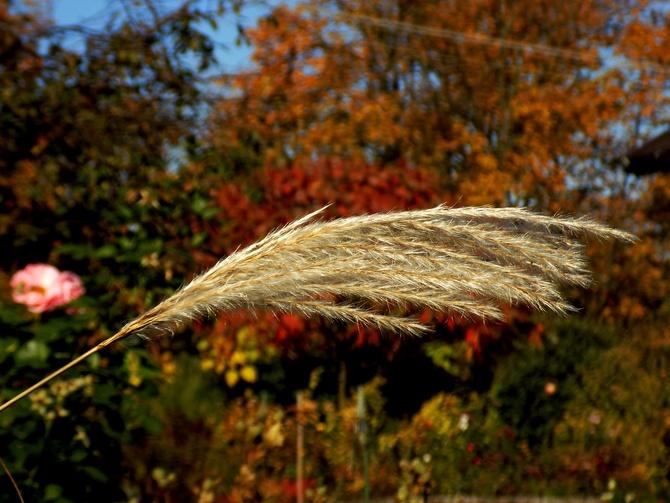 Wszyscy chwalą jesień... :)