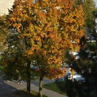 Dzisiejsza jesień widziana z mojego okna