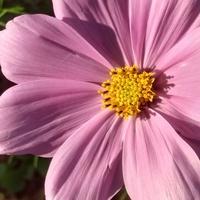 Imieninowy kwiat dla Jadzi :)