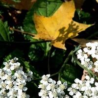 Jesień w białym wianuszku:)
