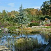 Jesień w Ogrodzie Botanicznym w Powsinie.