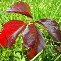 Jesienny kontrast:) Miłego dnia:)