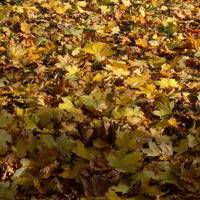 Jest już prawdziwa jesień