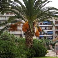 Już niedługo takie palmy będą rosły u nas
