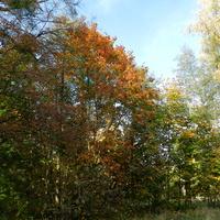 Klony jesienią