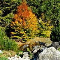 Kolorowe drzewko