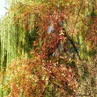 Kolory jesieni w Ogrodzie Botanicznym